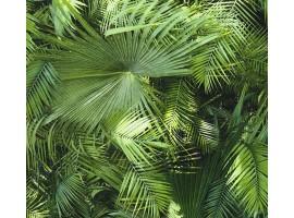 Carta da parati amazzonia