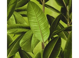 Carta da parati giungla tropicale