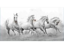 Quadro su vetro Cavalli Selvaggi