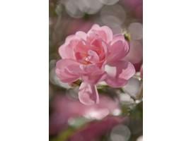 Bouquet | Fotomurale