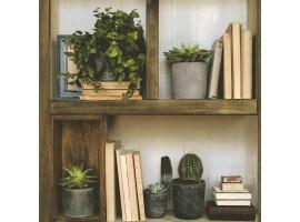carta da parati libreria & cactus