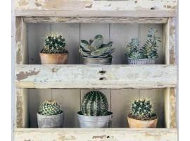 carta da parati armadio cactus