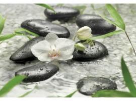 Fotomurale Meditation | cod. 8-319