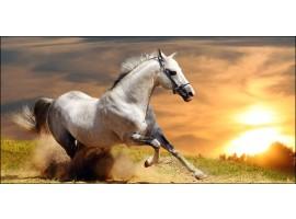Cavallo al galoppo | Quadro su tela