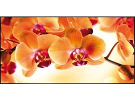 Quadro su tela Orchidea Arancio