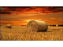 Quadro su tela tramonto in campagna