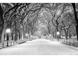 Fotomurale viale alberi e neve