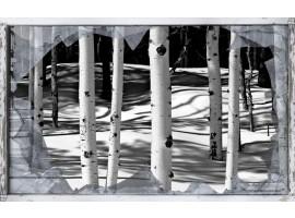 quadro effetto finestra rotta su campo di betulle