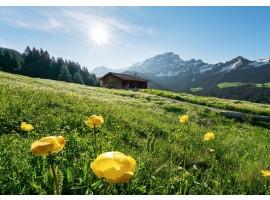 fotomurale Baita Alpina