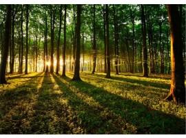 fotomurale bosco mistico