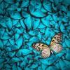 adesivo scaffale farfalle
