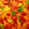 adesivo tavolo autunno