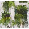 carta da parati piastrelle piante