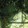 fotomurale Garden