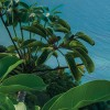 fotomurale Jurassic Island