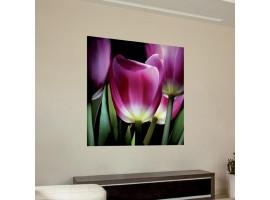Adesivo murale Fiori - Tulipani