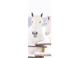 adesivo per porta cavalli bianchi