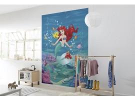 Ariel 184x254