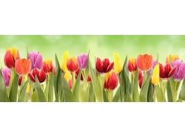 paraschizzi adesivo tulipani