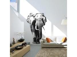 adesivo gigante elefante