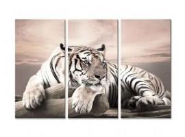 Quadro tre pannelli Tigre