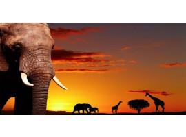 Quadro su tela Elefanti
