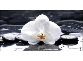 Quadro su tela Orchidea Bianca