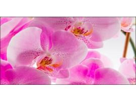 Quadro su tela Orchidee Rosa