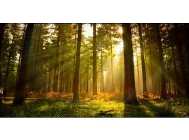 Quadro bosco