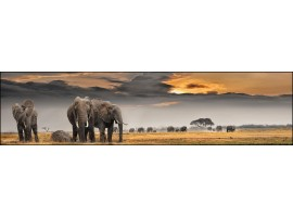 Elefanti | Quadro su tela