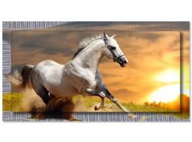 Quadro in tela con cornice Cavallo Bianco Argento