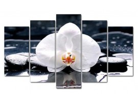 Orchidea bianca (five in tela)