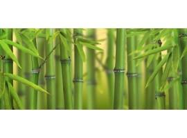 Dreamy fotomurali bambù