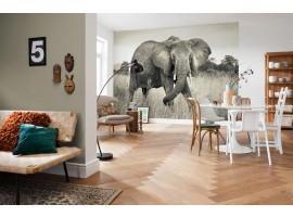 Elefante 368x248