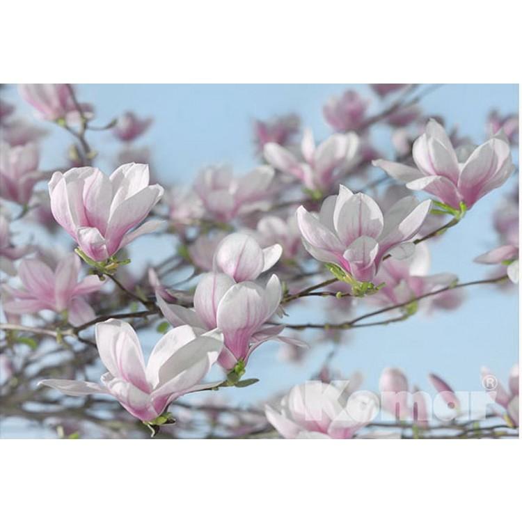Fotomurale Magnolia | cod. 8-738