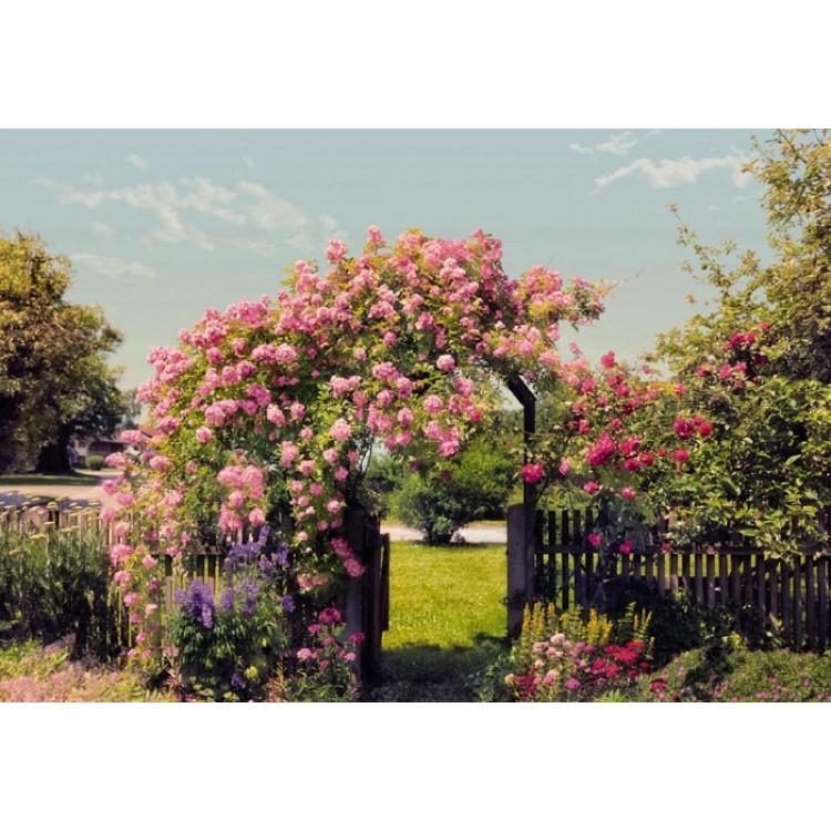 Fotomurale Giardino di Rose | cod.8-936 Komar