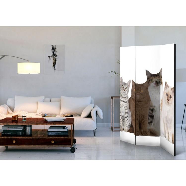 paravento separé gatti