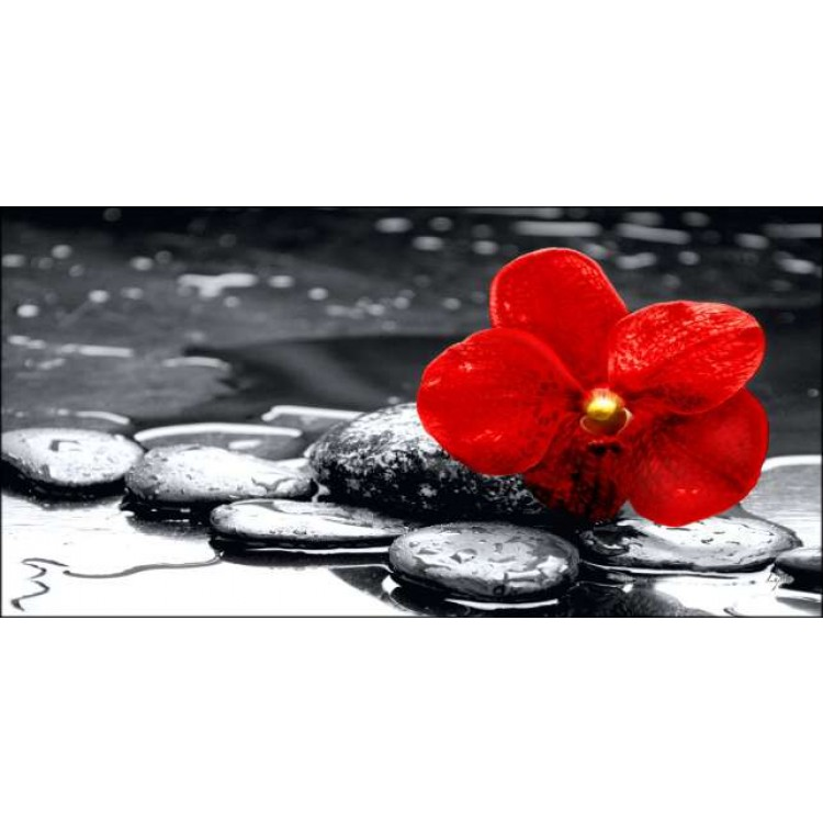 Quadro su tela Orchidea Rossa