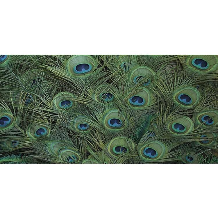 fotomurale design pavone