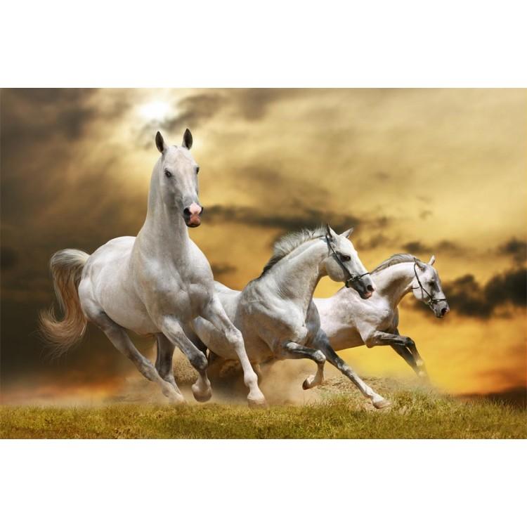 Fotomurale cavalli selvaggi