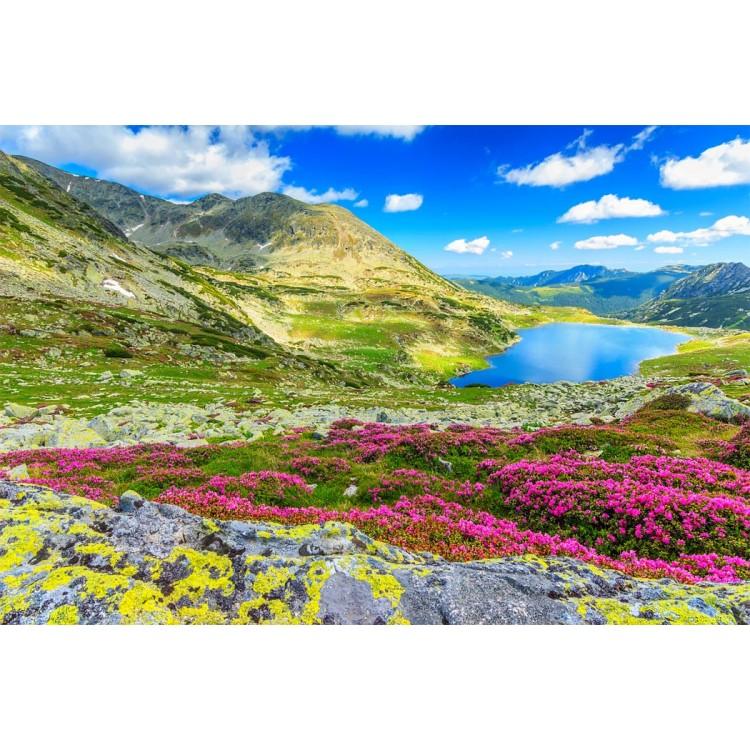 Fotomurale lago alpino
