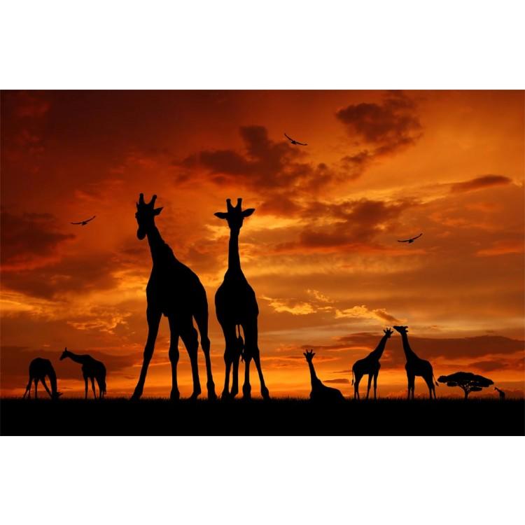 Fotomurale giraffe
