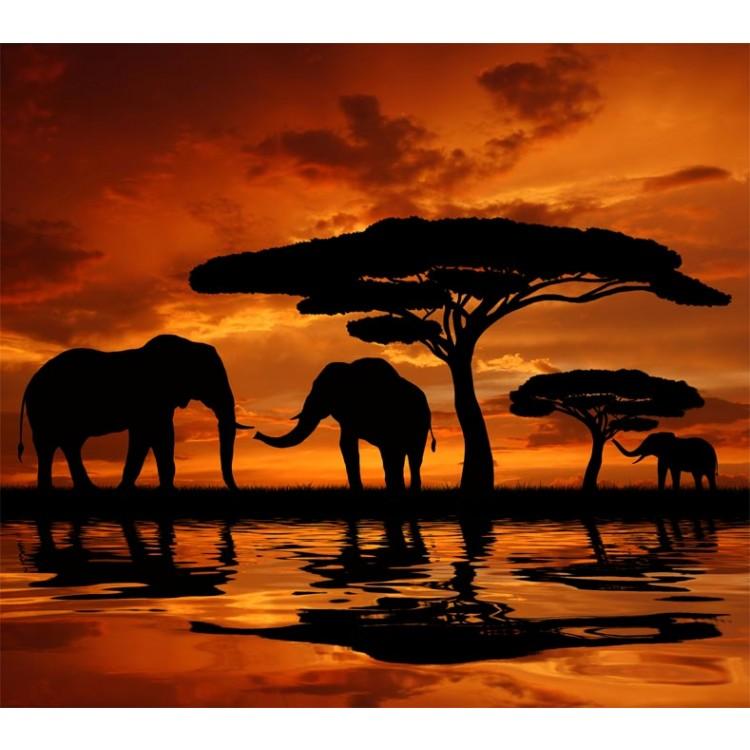 Fotomurale elefanti