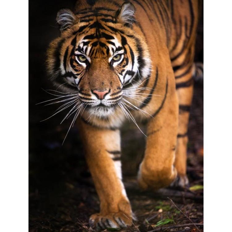 adesivo mobile tigre ambientazione