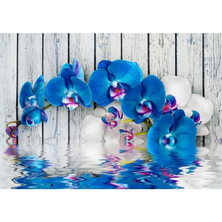 fotomurale orchidee azzurre