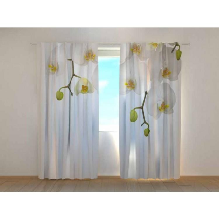 Tenda classica Orchidee Bianche