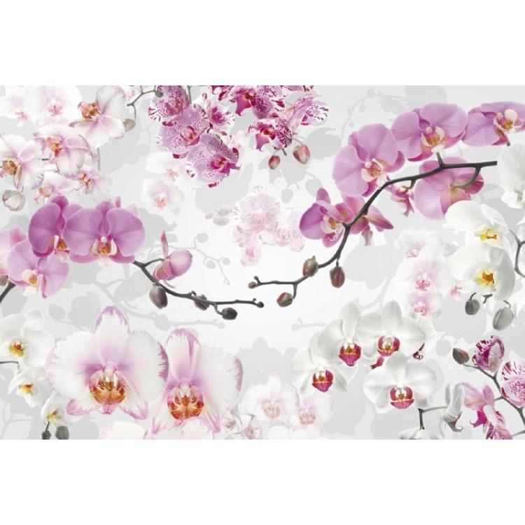 Fotomurale Orchidee | TNT by Komar
