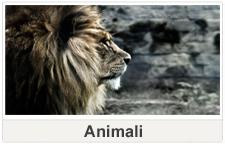 Quadri tela Animali